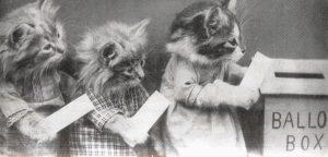 kittens-voting